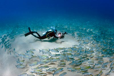 Scuba Diving In Loreto Bay